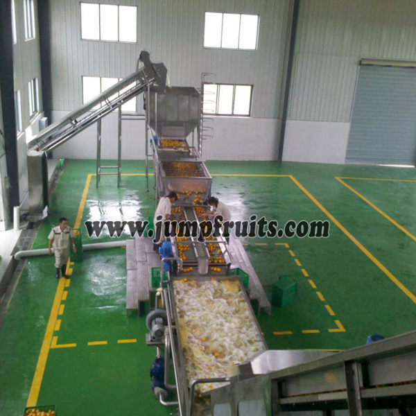 fruits washing grading sorting machine